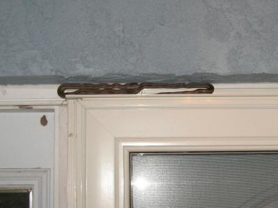 Yellow Rat Snake on door