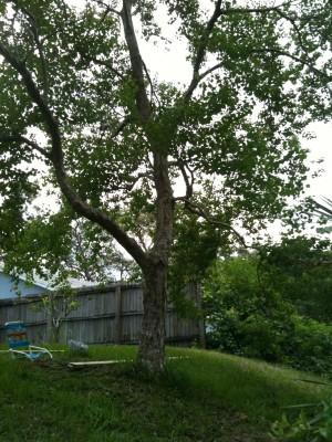 01-leucht_treehouse