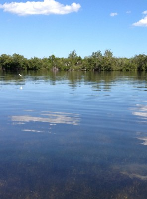 pine-island-canoeing-2-jumping-fish